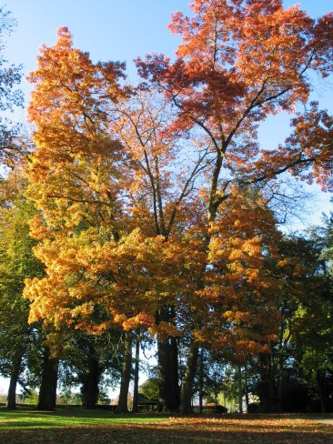 Autumn Park 002
