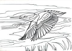 Darting Kingfisherjpeg