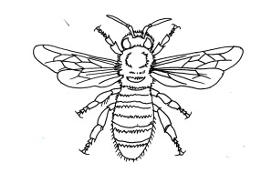Line bee